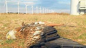 THE FATAL GREEN NEW DEAL: WIND AND SOLAR ENERGY DON'T WORK BUT WINDMILLS KILL BIRDS