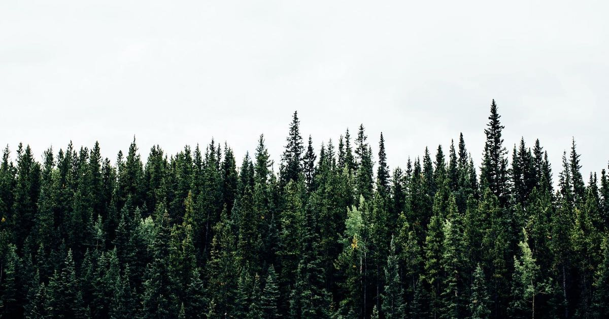 Making Green While Pushing the Green Agenda